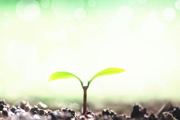 【受験生の悩みと人生創造に貢献できたら】心のタネが花開く時、あなたの世界が変わるから!